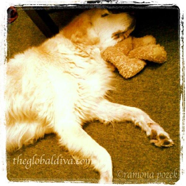 Biscuit Finds Comfort